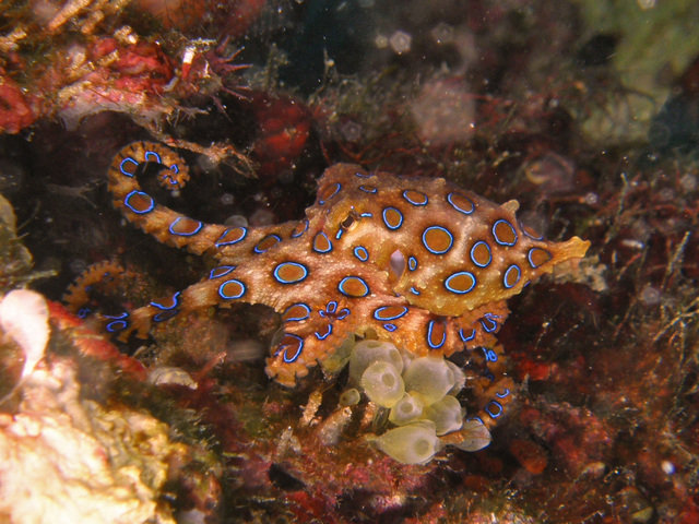 Diving in Manado, Indonesia - By Patricia Broeders