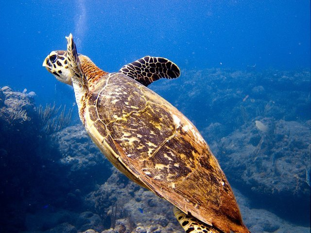 Diving in Basseterre, Saint Kitts and Nevis - By Colin Cren